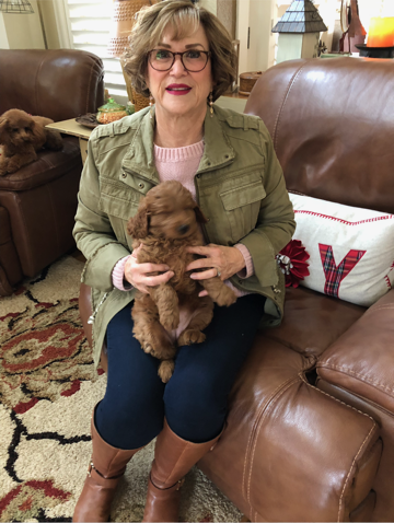 Home - Doodles and Poodles of Montana