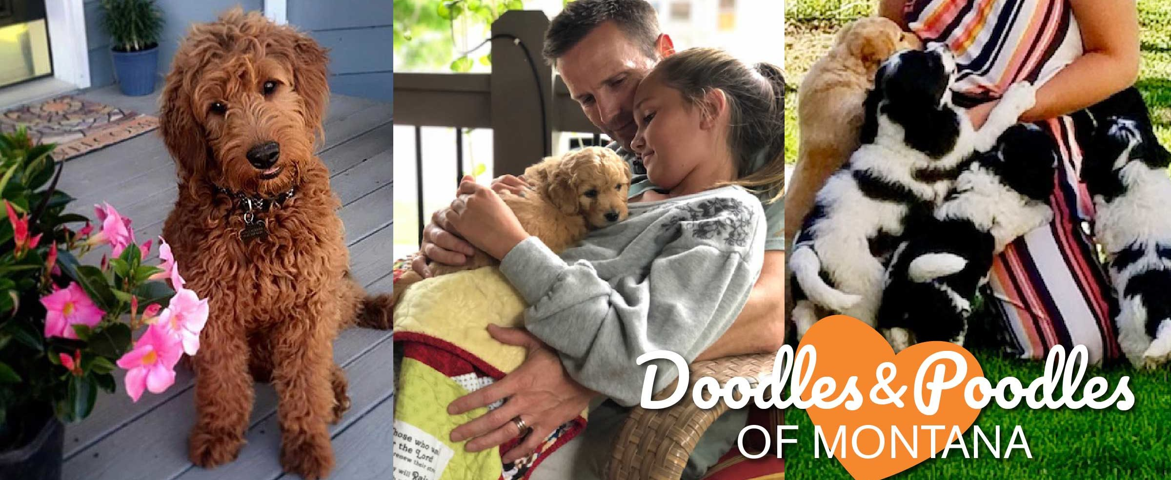 Doodles and Poodles of Montana