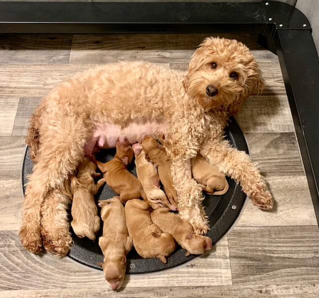 Lexi and pups